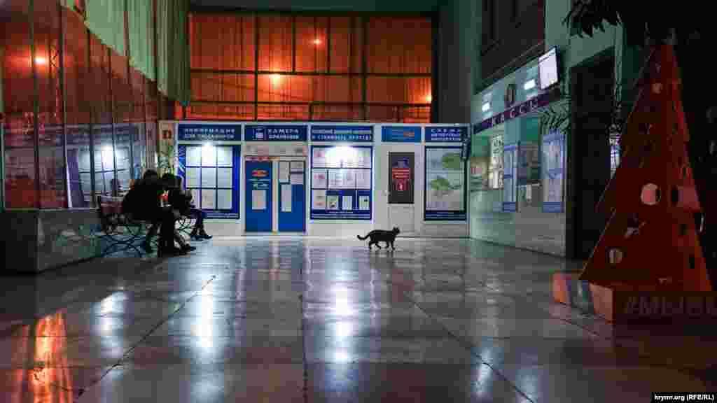 На Алуштинском автовокзале все, не считая кота, в ожидании рейсовых автобусов