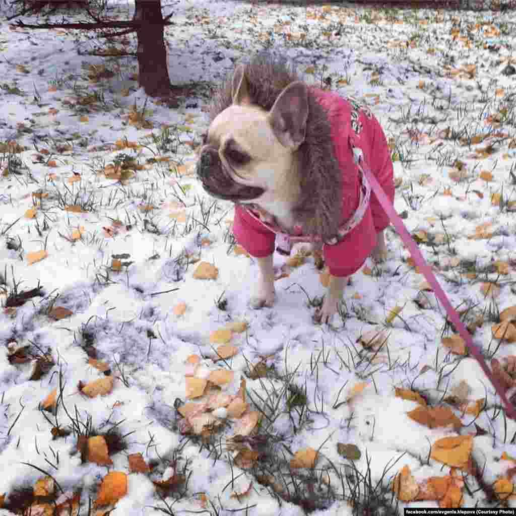 Що собакам ті людські проблеми? Київ