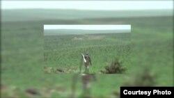 Скриншот с видео, распространенного азербайджанскими СМИ