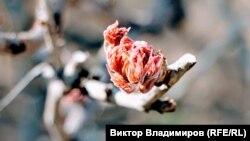 За даними Укргідрометцентру, з 31 березня по 2 квітня, у зв'язку з вторгненням арктичного повітря в західних, північних, більшості центральних областей очікується відчутне зниження температури