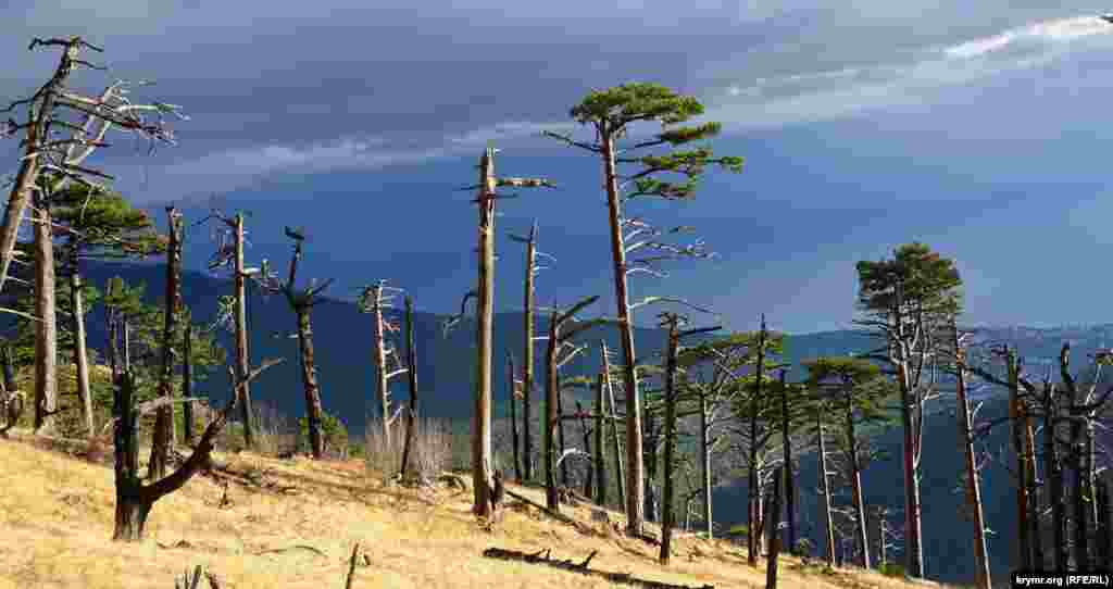 Апокалиптическая картина на склонах гребня Баланын