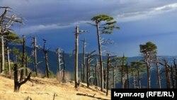"""Yanğınlarnıñ """"qurbanları"""": Yalta civarındaki qoruq ormanında (süret toplamı)"""