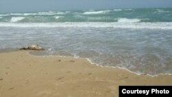Каспий теңізінің жағалауы. (Көрнекі сурет).
