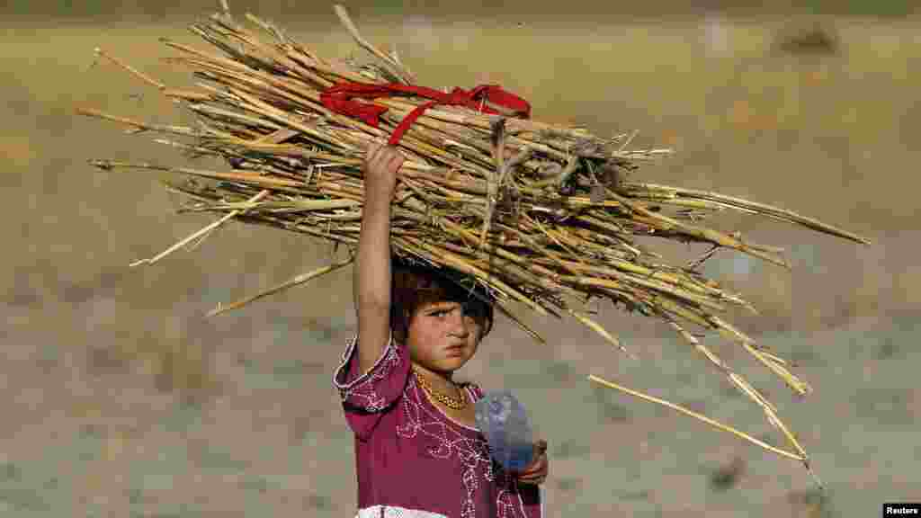 An Afghan girl carries a pile of dried shrubs, which she gathered to use for cooking and heating purposes on the outskirts of Kabul on September 27. (REUTERS/Omar Sobhani)