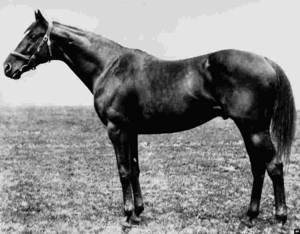 The thoroughbred Sir Barton, winner of the 44th Kentucky Derby, poses for a portrait in May 1919. Sir Barton was the first Triple Crown winner in 1916.