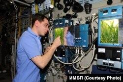 Космонавт Сергей Волков и оранжерея Лада-01 на МКС
