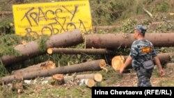 Apărătorii pădurii Himki