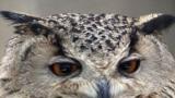 Iran -- Owl in bird's garden, Isfahan, 30Apr2009