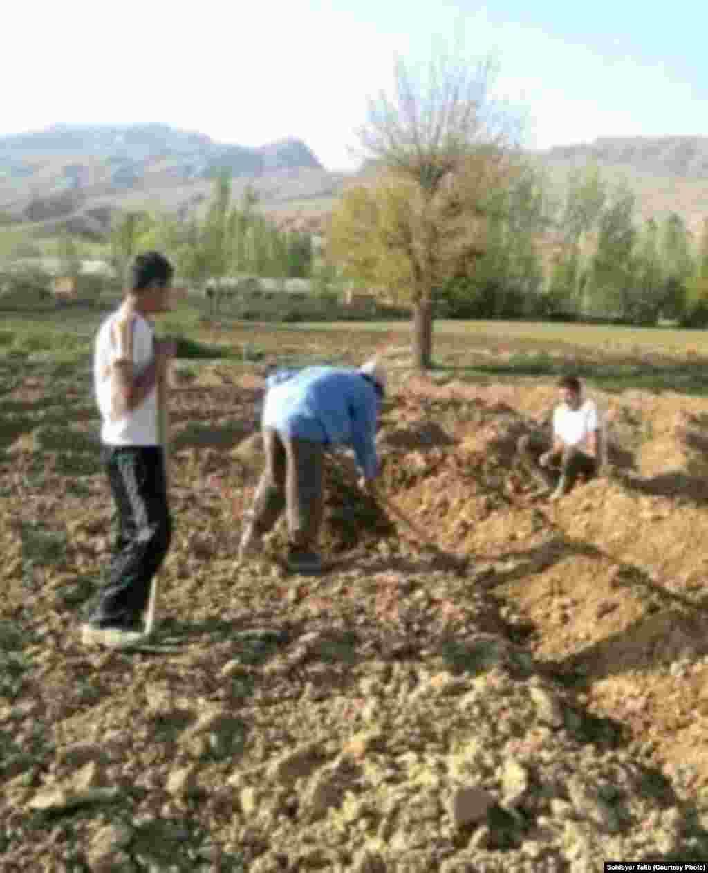 Земля является главным источником доходов многих местных семей