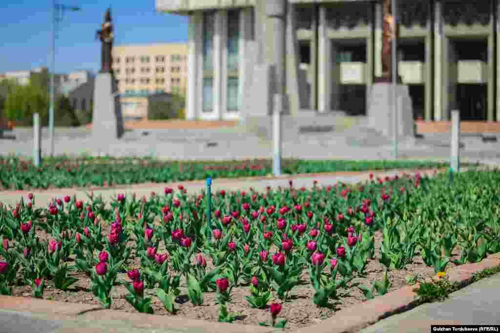 У здания Национальной филармонии расцвели тюльпаны.