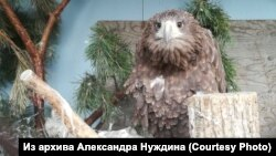 Питомцы частного зоопарка