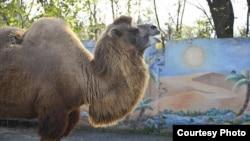 Пока условия в местном зоопарке далеки от идеальных