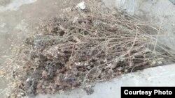 Метла, которой пользуются дворники в Узбекистане.