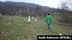 65-yaşlı fermer iddia edir ki, icra başçısı torpaqları əlindən almağa çalışır. Foto arxiv