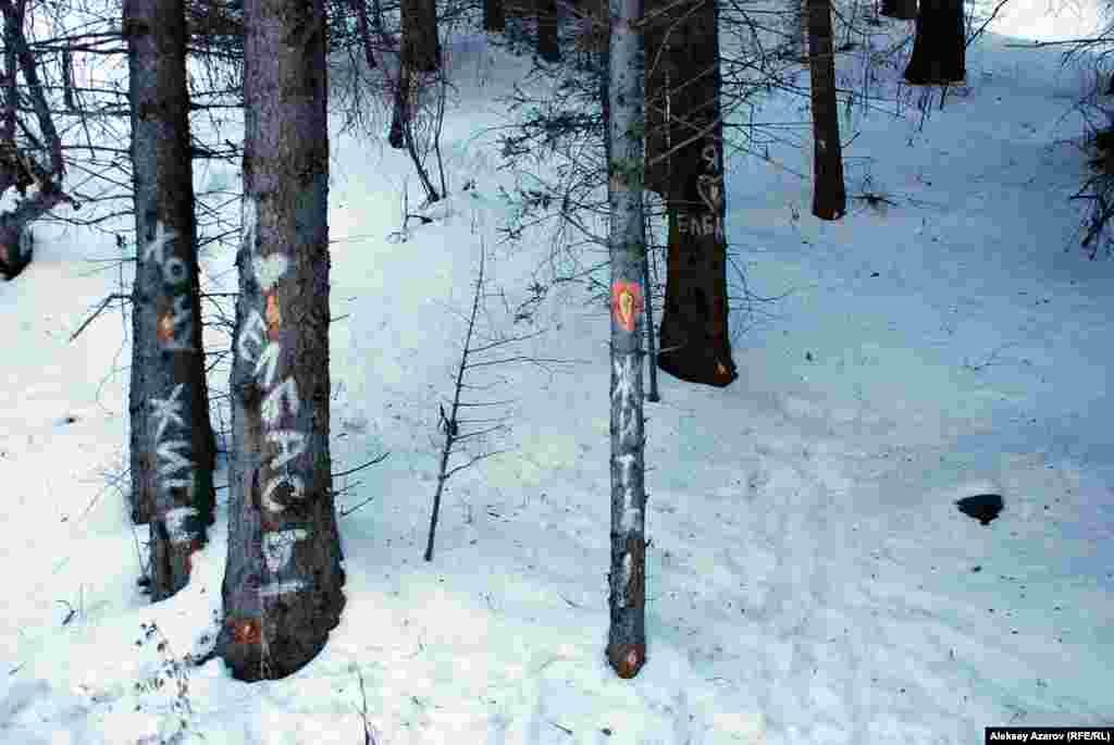 Вскоре аналогичные надписи появились и на других деревьях с зарубками. Кто-топодошел к делу творчески и обратился от имени деревьев: «Жить!», «Хотим жить!», «Өлтірме», «Люби».