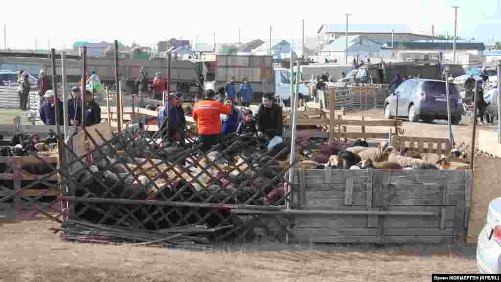 Люди выбирают баранов на скотном базаре.По традиции в первый день Курбан-айта мусульмане приносят в жертву животное.
