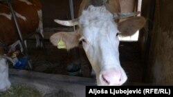 Farma Ljube Maletića u Kojčinovcu