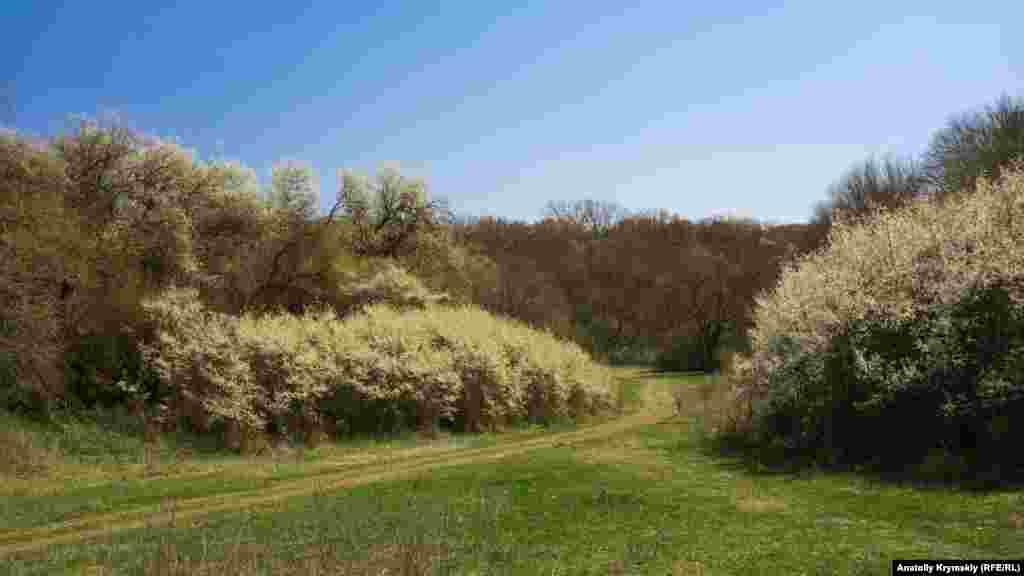 Проселочная дорога вьется между пышно цветущими кустарниками и деревьями