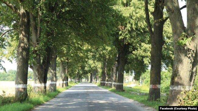 Дорога, где еще сохранились деревья