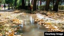 Вода в одном из парков Бишкека.