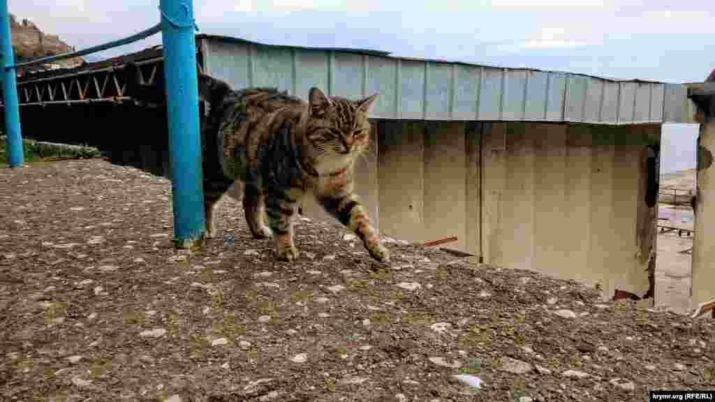 Кішка на одній з вулиць Партеніта
