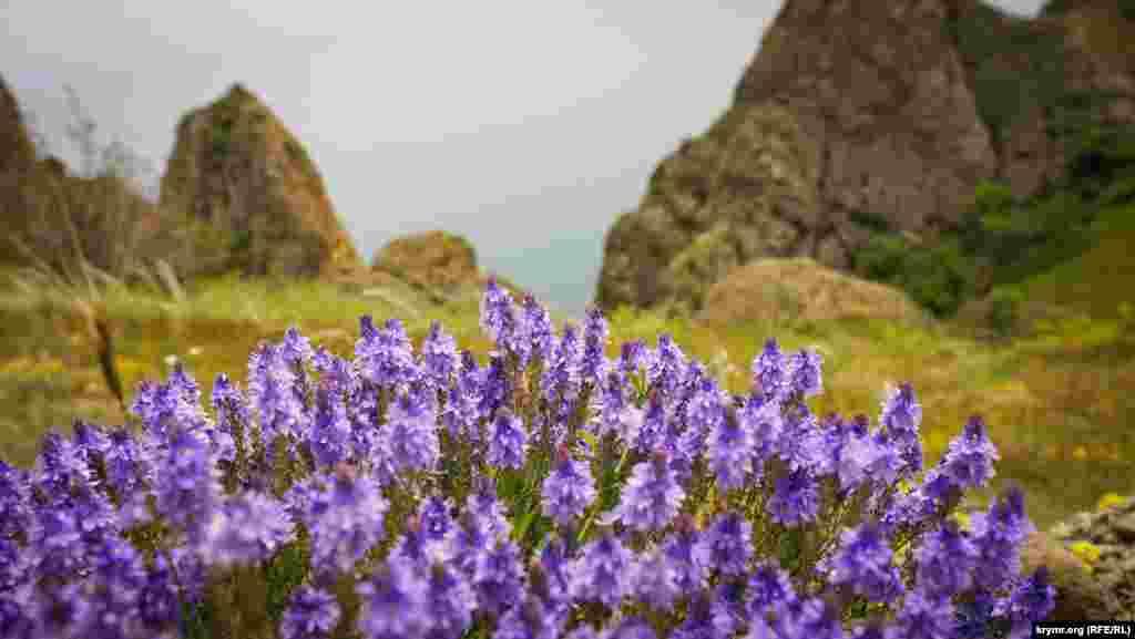 Кара-Даг – одна из уникальных визиток Крыма. Живописный горный массив раскинулся в прибрежной зоне полуострова между поселками Курортное, Щебетовка и Коктебель. Это остатки вулкана, извергавшегося приблизительно 150-130 миллионов лет назад