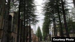 По словам главного эколога Абхазии, много ума не надо, чтобы вырубить деревья… Но насколько это целесообразно?