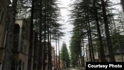 Ткуарчальцы уверены, что судьба аллеи кедров не должна касаться никого в Абхазии – право на решение этого вопроса есть только у них