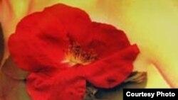 """""""Сара"""" - дебютный роман Джей Ти Лероя, оказавшийся одним из самых популярных произведений писателя"""