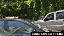 Отныне техническое состояние украинских автомобилей будет определяться прямо на дороге