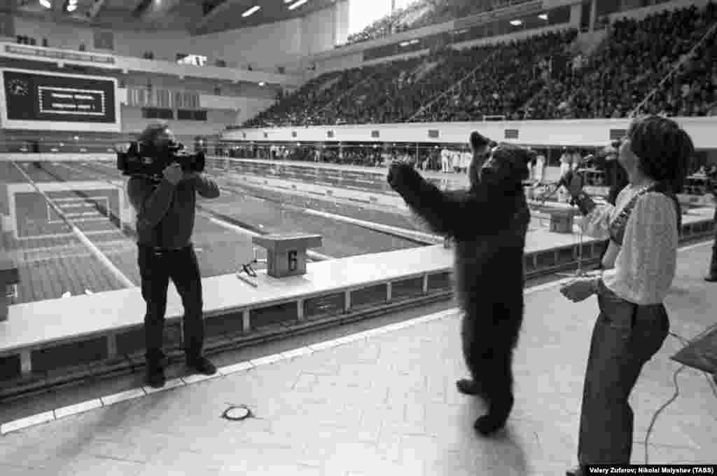 Медведь аплодирует открытию олимпийского бассейна в Москве.