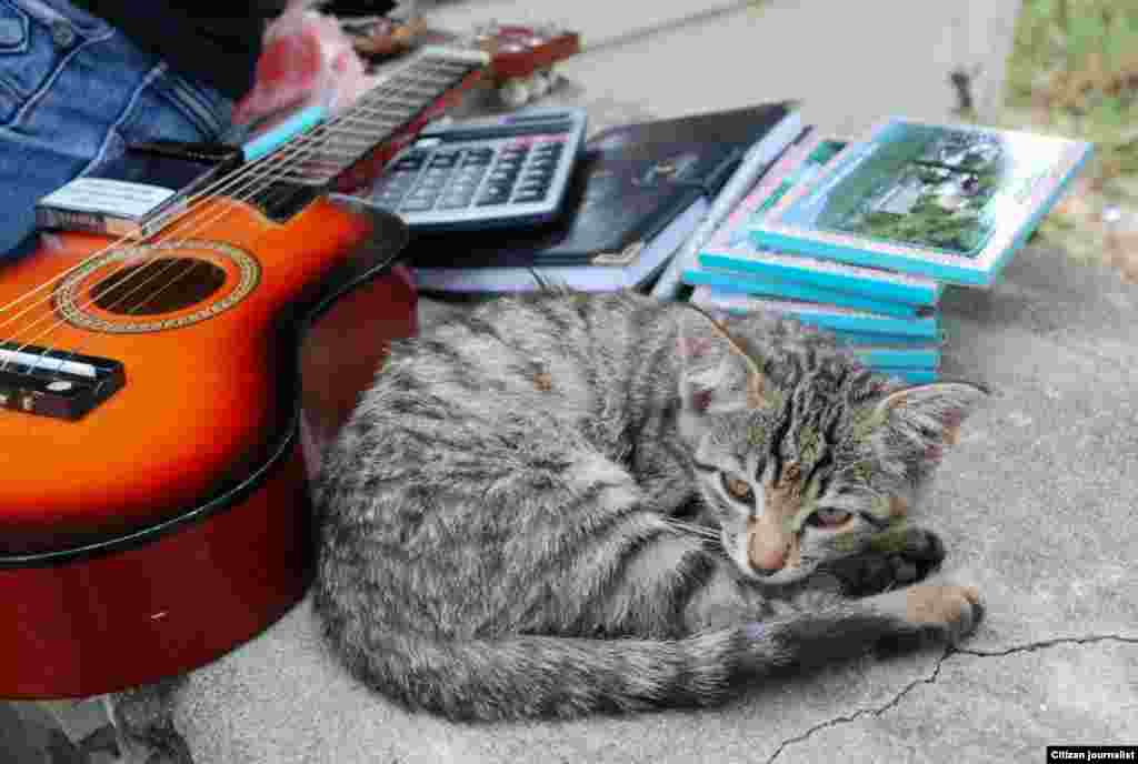 Bremen musiqiçisi -Heyf ki, gitaranı ifa edən vaxt tuta bilmədim.Yükləyib: Filankəs