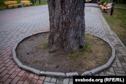 Плітка пакладзена надта блізка да ствала каштана ў парку Жылібэра