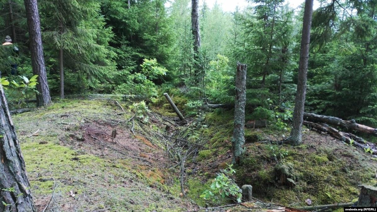 Нелегально вырублены украинские леса становятся древесным углем для ЕС – Всемирный фонд природы