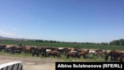 Найденные лошади. 7 мая 2018 года.
