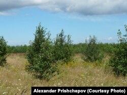 Заброшенные сельскохозяйственные земли, Смоленская область
