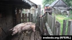 Porcii și Guvernul: cine a fost protejat și cine sunt victimele