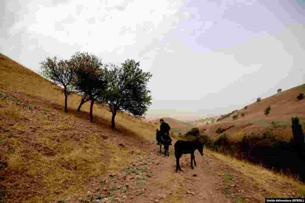Жители села Кызылсу по договоренности пасут домашний скот по очереди.