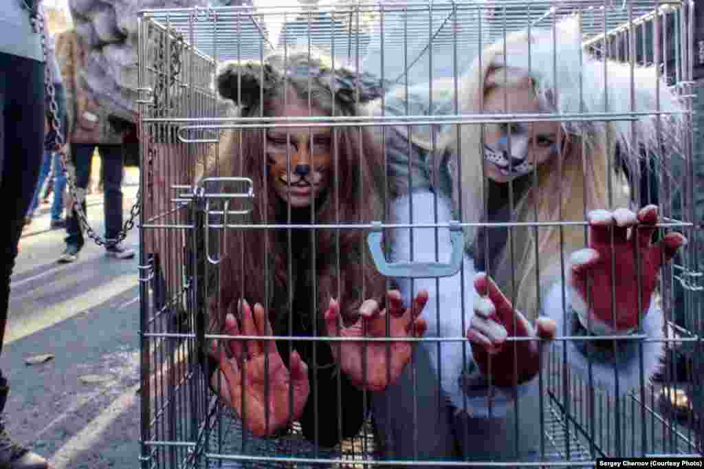 Demonstrators in St. Petersburg dressed up as animals in cages.
