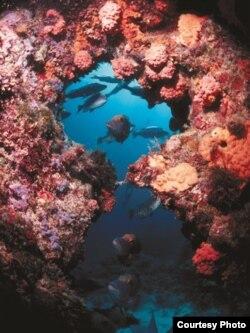 Коралловые сады Большого Барьерного рифа