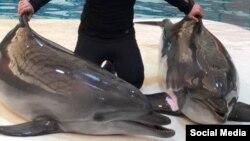 دلفین «آلفا» (سمت چپ)