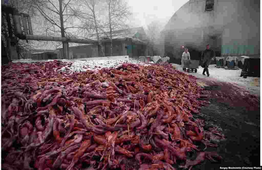 Animal remains at a fur factory near St. Petersburg, 2002