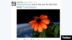 تصویری از نخستین گل پرورش یافته در فضا