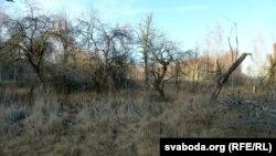 Зьдзічэлыя сады замест сялянскіх сядзібаў