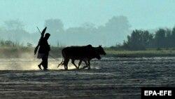 Поле каля ракі Брахмапутра, архіўнае фота