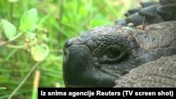 Galapagos - yeni növ tısbağa