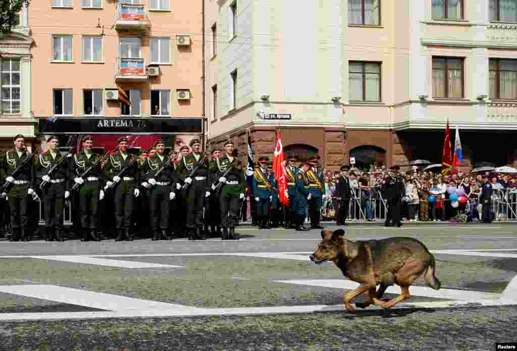 A dog runs past members of separatist forces standing in formation during the Victory Day parade, marking the 71st anniversary of the defeat of Nazi Germany in World War II, in Donetsk on May 9. (Reuters/Alexander Ermochenko)
