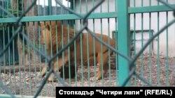 Лъвът Любо