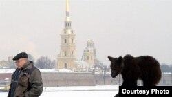 «Небесную линию» Петербурга охраняет ЮНЕСКО, но представители организации вынуждены договариваться с властями