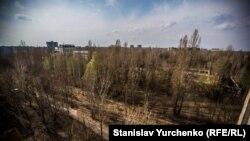 Науковець Сергій Гащак запевняє, що в Чорнобильській зоні горить не Рудий ліс, а звичайний